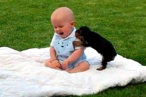 animal e bebê 3