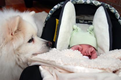 animal e bebê 2